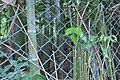つりがね池公園 - panoramio (11).jpg