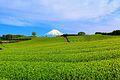 今宮の茶畑 - panoramio (1).jpg