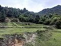 新丰司茅坪林场20150412 - panoramio (71).jpg