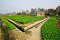 红星场田园景色Scenery in Guangzhou, China - panoramio.jpg
