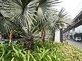 02354jfBalintawak Interchange Caloocan Quezon City FootbrindgeEDSA Roadfvf 06.jpg