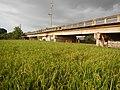 03910jfPaddy fields village Baliuag Bulacan Candaba Pampanga Bridge Roadfvf 14.JPG