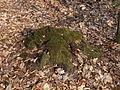 05-04-03-plagefenn-by-RalfR-36.jpg