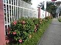 0931jfHibiscus rosa sinensis Linn White Pinkfvf 03.jpg