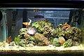 10G Nano Reef.jpg