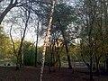 170520111780 Усадьба Расторгуева Л.И.- Харитонова, парк с прудом.jpg