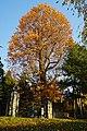 171103 Iwate University Morioka Iwate pref Japan16s3.jpg