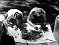 1955. Insect checkers G. Wise (left) and R. Rensil examining 15 inch twigs for western spruce budworm larvae that survived DDT spray. Ochoco control unit, Oregon. (32677145510).jpg