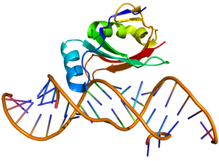 50S ribosomal protein L25