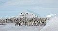 2007 Snow-Hill-Island Luyten-De-Hauwere-Emperor-Penguin-42.jpg
