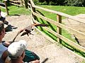 2008 07 15 Bird Care Centre of Castel Tyrol 60780 D9775.jpg