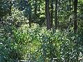 20120909Impatiens glandulifera1.jpg