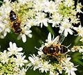 2014-08-10 11-14-25 insecte.jpg