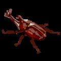 201410 rhinoceros beetle.png