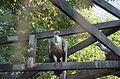 2015-09-04. Сафари-парк в Краснодаре 038.jpg