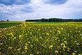 20150523 Naturpark Saar-Hunsrück Zerf Heltern Feld Himmel Wald IMG 4526 by sebaso.jpg