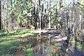 2015 31 Национальный парк Мещёрский.jpg
