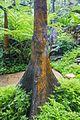 2016 Singapur, Ogrody botaniczne (229).jpg
