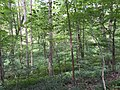 2017-08-10 14 17 52 Forest along the Gerry Connolly Cross County Trail between Miller Heights Road and Vale Road in Oakton, Fairfax County, Virginia.jpg