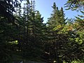 2017-09-11 10 21 12 View east along the Maple Ridge Trail at about 2,820 feet above sea level on the western slopes of Mount Mansfield within Mount Mansfield State Forest in Underhill, Chittenden County, Vermont.jpg
