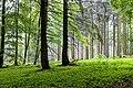 2019-05-21 110937 Landschaftsschutzgebiet Süd-Deister.jpg