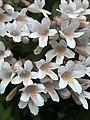 2020-05-18 SP, Unidentified plants, 02.jpg
