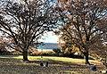 2020 Billings Lawn in Fort Tryon Park.jpg