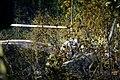 2020 Chuhuiv An-26 crash 07.jpg