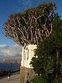 38400 Puerto de la Cruz, Santa Cruz de Tenerife, Spain - panoramio (209).jpg