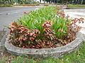8095jfQuezon Memorial Circle City Monumentfvf 31.JPG