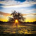 90 365² El árbol del atardecer (8349220736).jpg