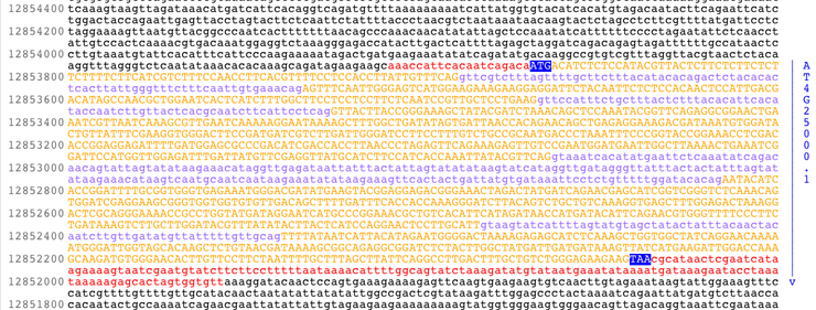 740px-AMY1gene.png