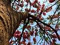 A low angle shot of a tree.jpg