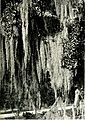 A thousand-mile walk to the Gulf (1916) (14780098884).jpg