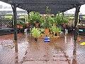 A very damp garden centre - geograph.org.uk - 1087553.jpg