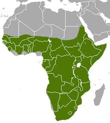 Kaart van Afrika met een gemarkeerd bereik (in het groen) die het grootste deel van het continent ten zuiden van de Sahara woestijn