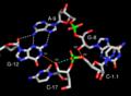 Acid base hammerhead ribozyme.png