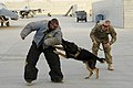 Afghanistan AEF 2012 120722-F-VN552-053.jpg