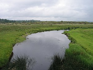 River Teifi - The river at Cors Caron
