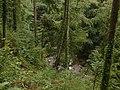 Afon Wen in the Coed y Brenin - geograph.org.uk - 241470.jpg