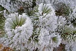 definition of frost