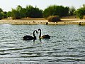 Al Qudra lake near Ras al Khaimah.jpg