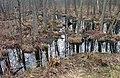 Aldercarr 08(js), Biebrza National Park (Poland).jpg