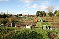 Allotments off Hill Lane, Colden Common - geograph.org.uk - 73174.jpg