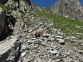 Alpine Ibex (Bouquetin) @ Path from L'Index to Col de la Gliere @ Hike to Lacs des Chéserys, Lac Blanc, Lac Cornu & Lacs Noirs @ Chamonix (15338513146).jpg