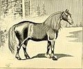 American horses and horse breeding - a complete history of the horse from the remotest period in his history to date. The horseman's encyclopedia and standard authority on horses, embracing breeds, (14782579444).jpg