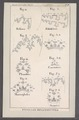 Ammonites spec. - - Print - Iconographia Zoologica - Special Collections University of Amsterdam - UBAINV0274 091 01 0086.tif
