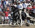 Andadura-pinto-horse-IMG 0973.JPG