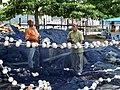 Angra dos Reis RJ Brasil - Pescadores consertando as redes - panoramio.jpg