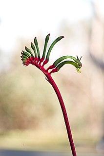 Flora of Western Australia